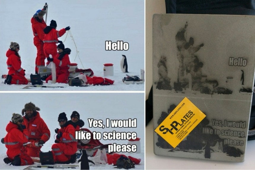 Science penguin meme on steel plates. I love it
