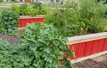 Raised garden beds full of vegetables and flowers.