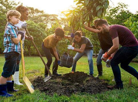 Yard And Garden Caring For Newly Planted Trees News