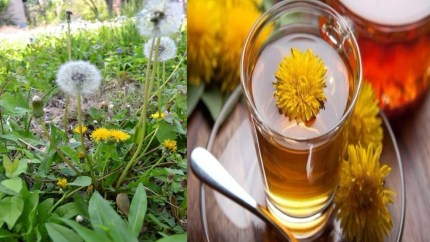 Dandalion tea