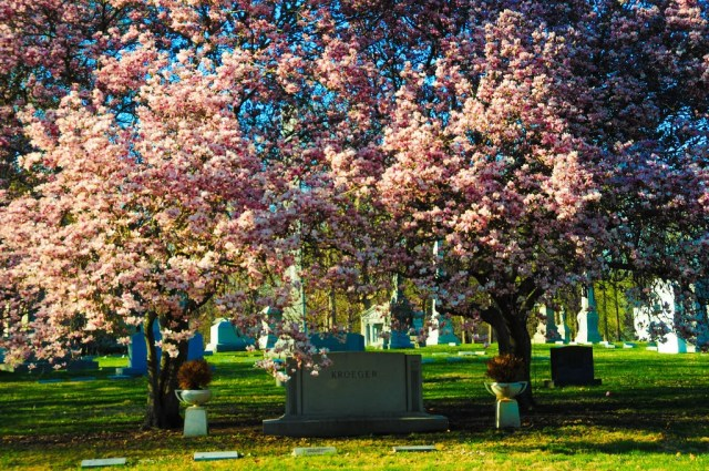 Trees at Crown Hill Cemetery