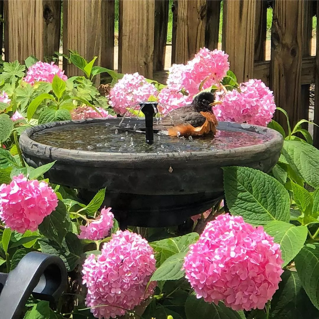 Bird bath surrounded by pink flowers and a bird in it. Photo by Instagram user @litdigitalart