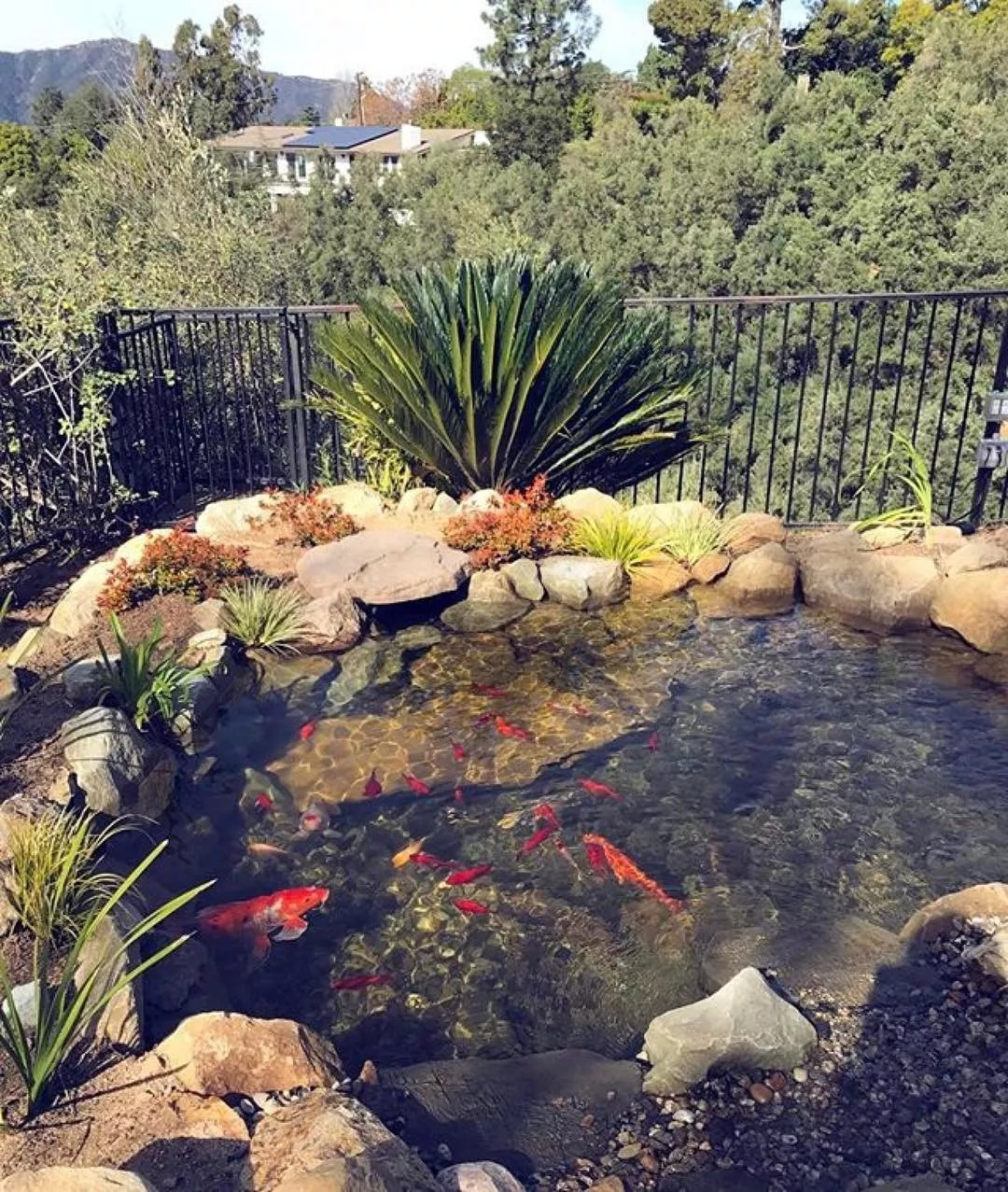 Backyard koi pond surrounded by plants. Photo by Instagram user @proponds_west