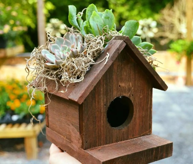 Brown birdhouse with succulents on the roof. Photo by Instagram user @gardensolutionsinc
