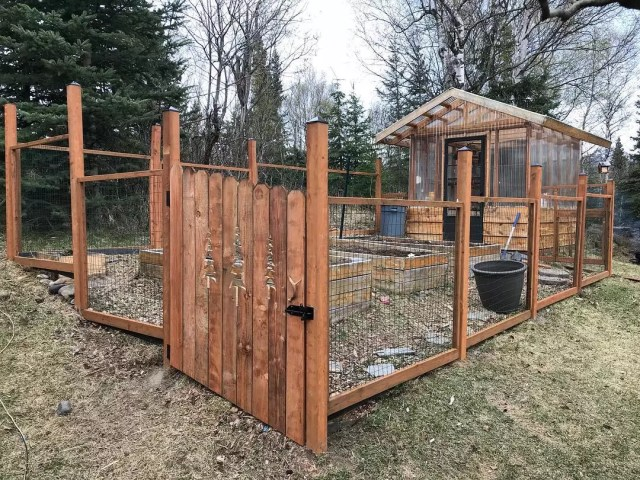 Wooden enclosing with chicken wire surrounding garden. Photo by Instagram user @kneadsandwants