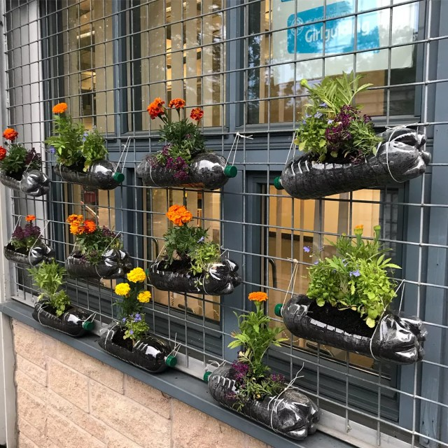 Plastic bottles repurposed as planters for urban garden. Photo by Instagram user @miss_lathe