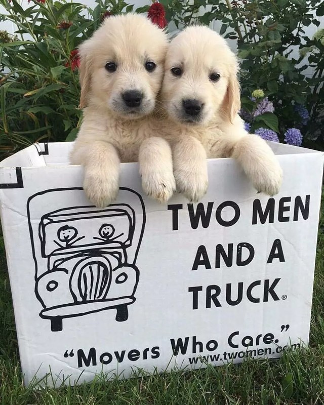 Puppies in a Moving Box. Photo by Instagram user @twomenandatruck