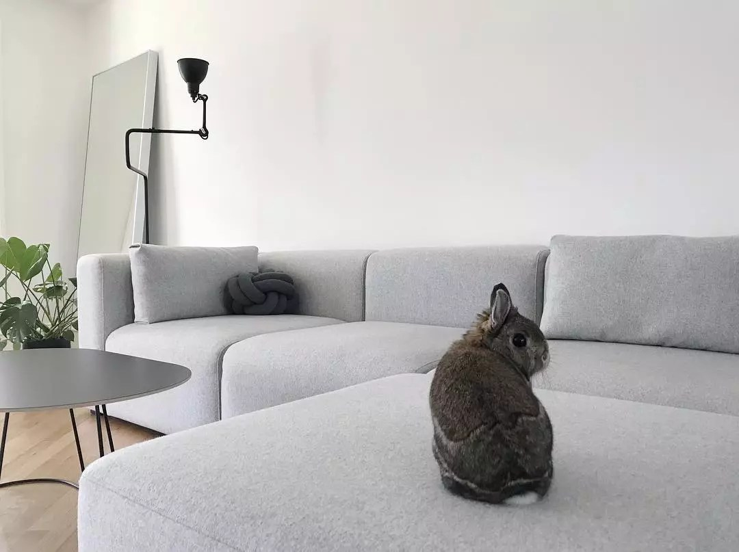 Rabbit on couch. Photo by Instagram user @minima_organizing