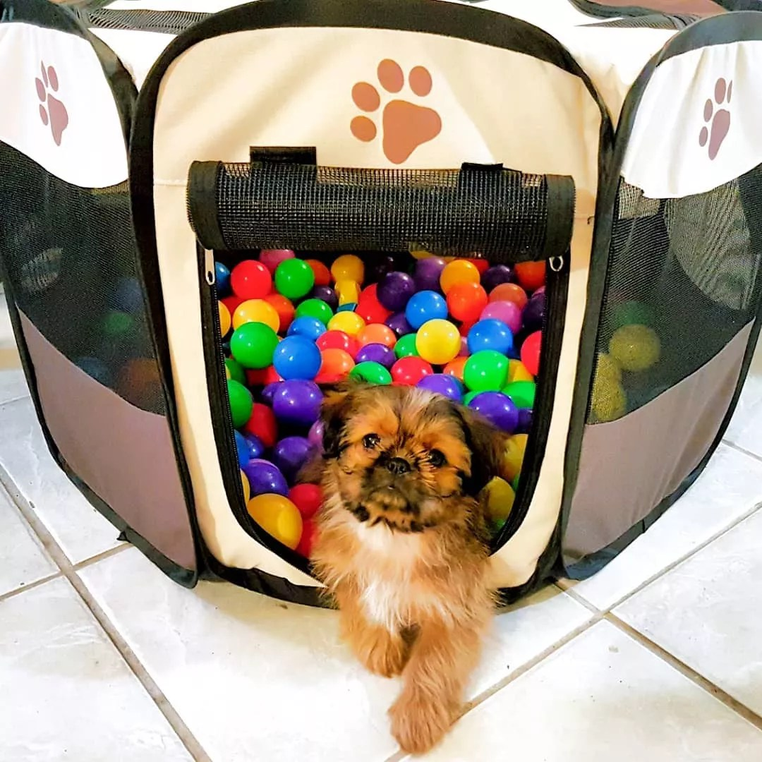 Dog Laying in DIY Ball Pit. Photo by Instagram user @its_baby_magz