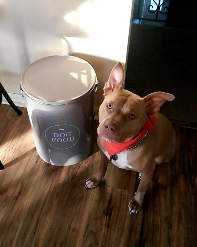Closed Container with Dog Food. Photo by Instagram user @haileyandpippy_rescuedgirls