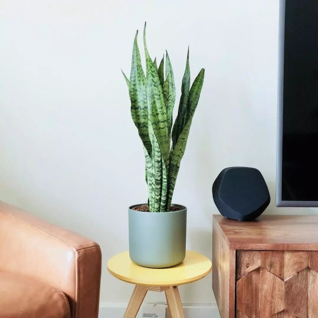 Potted plant on end table in living room. Photo by Instagram user @visually.awesome