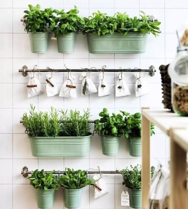 Herb garden on wall in kitchen. Photo by Instagram @say_no_to_waste_nz