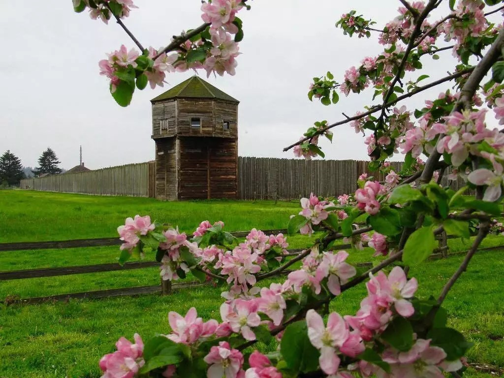 Fort Vancouver in the Spring with Cherry Blossoms Blooming. Photo by Instagram user @fortvancouvernps