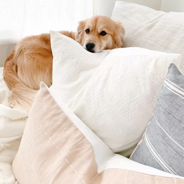 Dog Laying on Bed. Photo by Instagram user @blossominginteriors