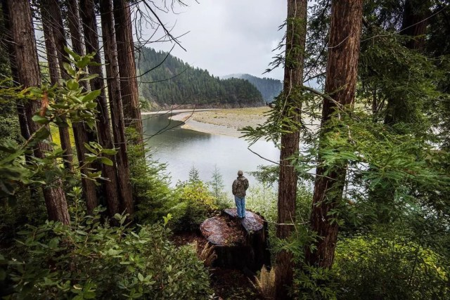 Man standing on tree stump in woods overlooking lake. Photo by Instagram user @nature_org