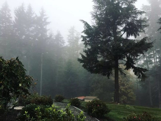 Foggy mist in a forest in Seattle. Photo by Instagram user @anna_rachh_