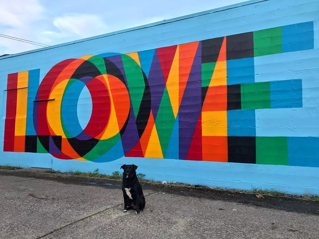 Dog sitting in front of blue wall with love written on it. Photo by Instagram user @knail3dit