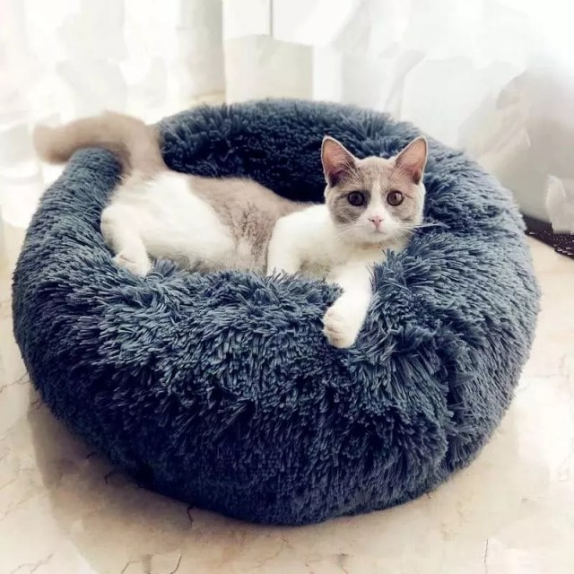 Cat sitting in fuzzy blue bed. Photo by Instagram user @movetrendy_