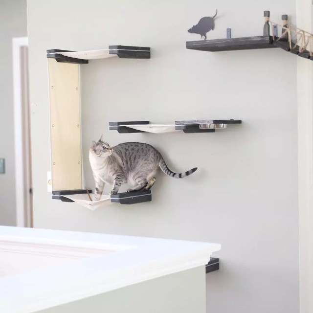 Gray cat walking on platforms attached to wall. Photo by Instagram user @catastrophicreations