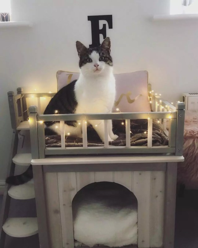Cat sitting on wood cat house with lights. Photo by Instagram user @fernando_thecat_x