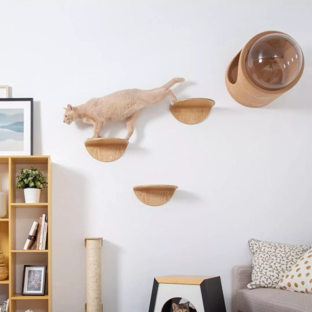 Cat running on wood stands attached to wall. Photo by Instagram user @myzoodesign