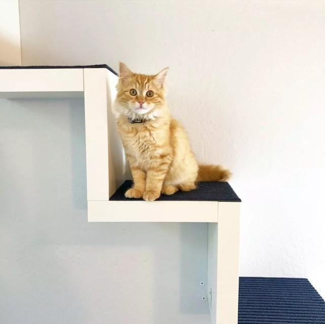 Orange kitty sitting on stairs. Photo by Instagram user @lemonade_mom