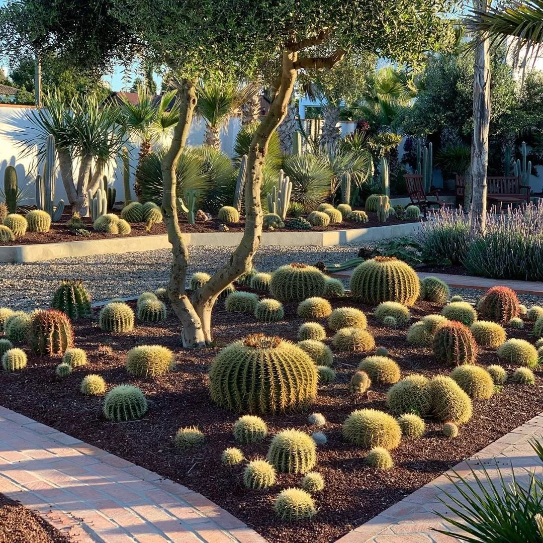 low maintenance landscaping with cactus in planting bed photo by Instagram user @stevevonsteen