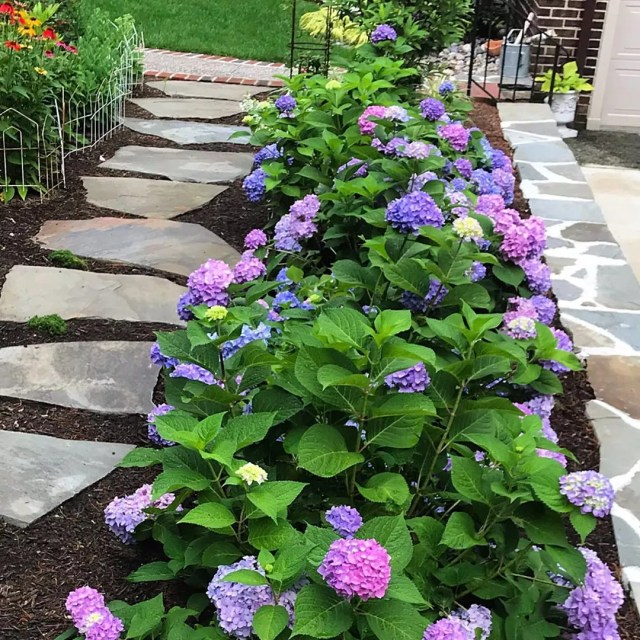 well manicured garden with multi colored hydrangeas photo by Instagram user @ablondeandabrush