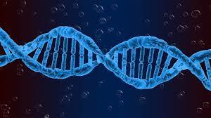 NEL NOSTRO DNA, SI NASCONDE LA STORIA DELLA NOSTRA EVOLUZIONE
