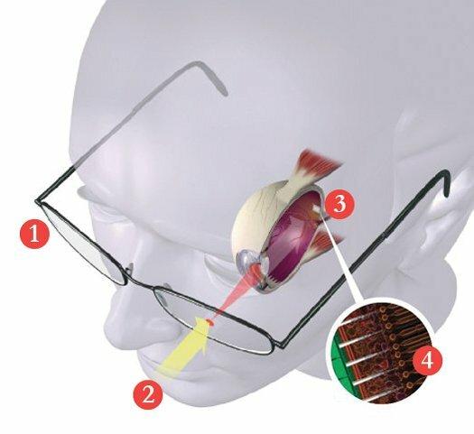 Bio-Retina, diagram by PopSci