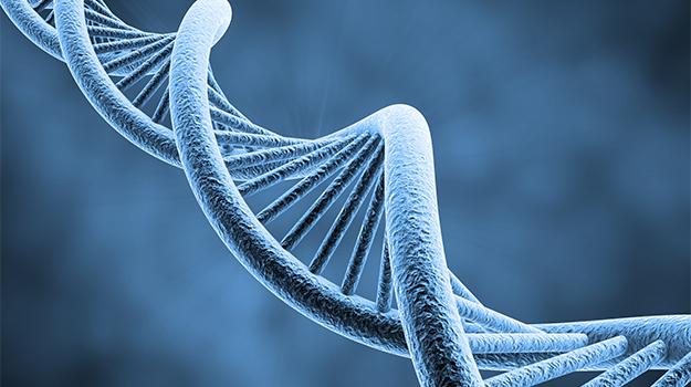 cabeza CRISPR