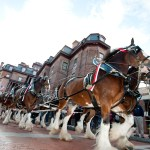 Katcef Brothers bringing the Budweiser Clydesdales back to Annapolis for Military Bowl in December