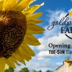 Opening Day at Goldpetal Farms