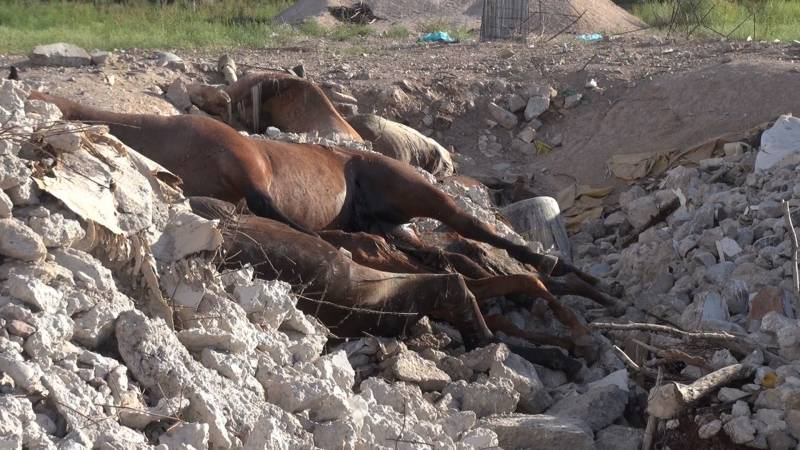 Was PaГџiert Mit Toten Pferden