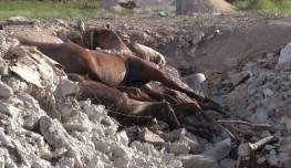 20.09.2012_CH.SG.03_Schlachthof Camargo_Grube mit toten Pferden (3)