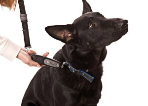 PatentoPet DOG-e-Walk Premium Dog Trainer Black