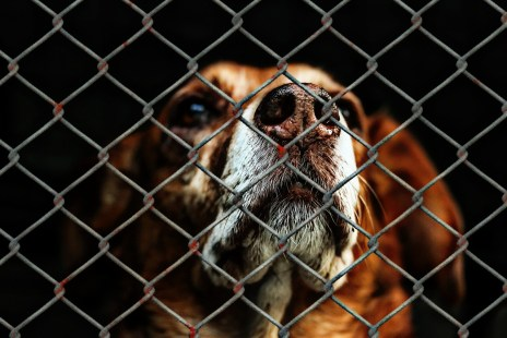 a dog behind a metal fence