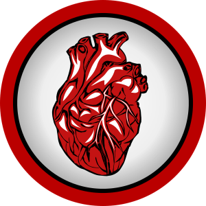 drawing of a human heart with a red circle around it