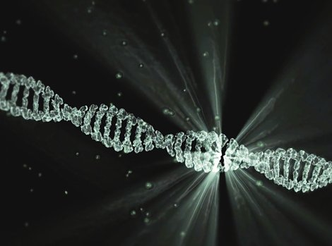 DNA sequence in white