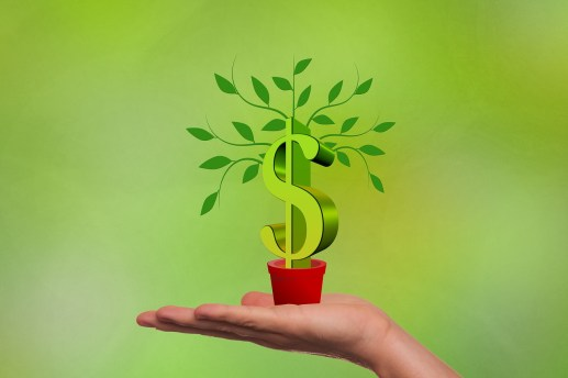 green plant in a pot with a money sign as the trunk