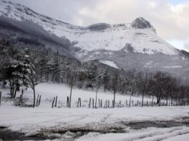 Bedarbide nevado