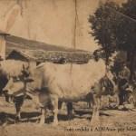 La ganadería y las minadas en Orduña