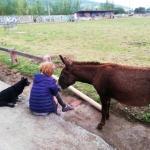 La Rondina, refugio de animales en Orduña