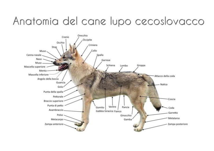 AnatomiaCanina