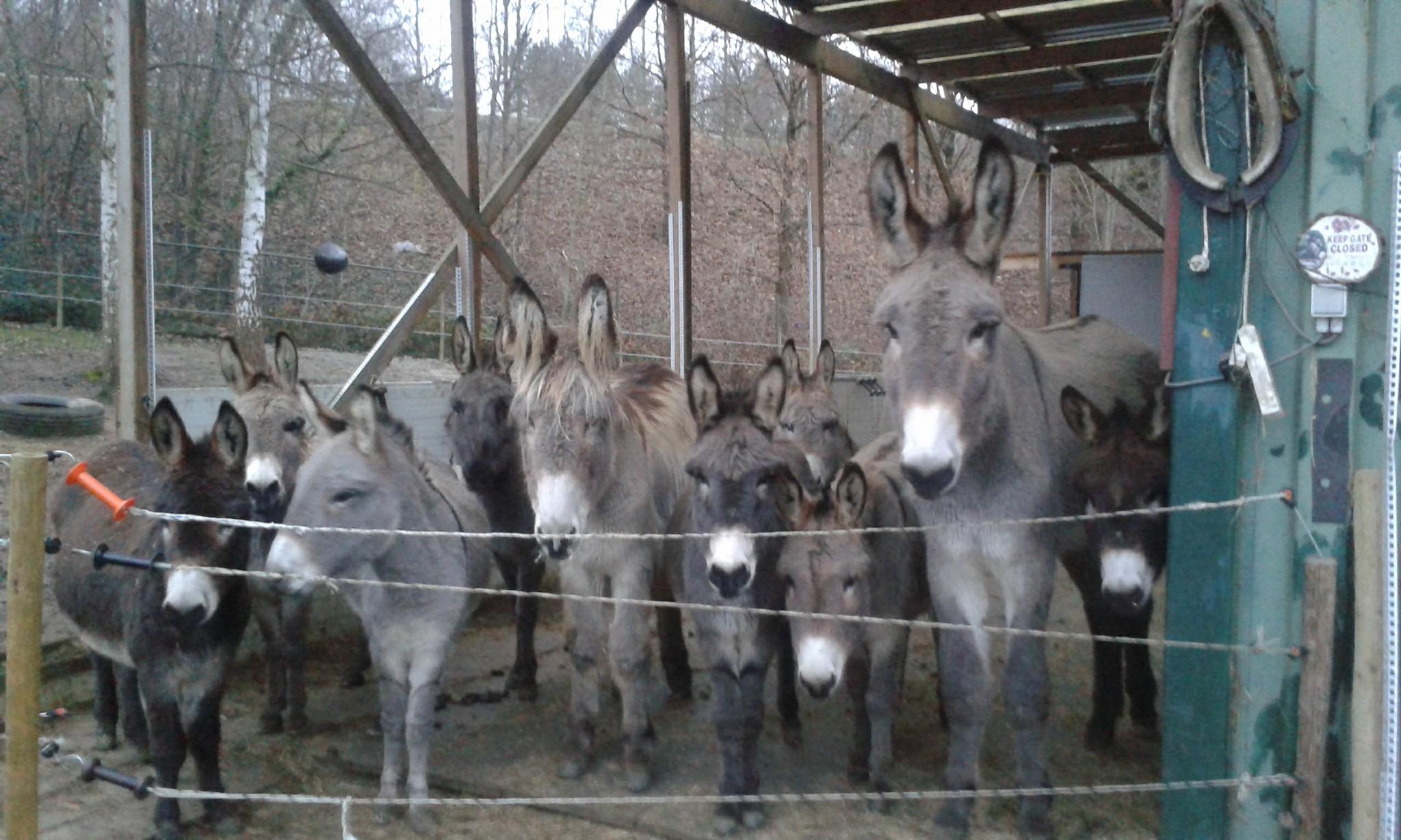 Onze ezels
