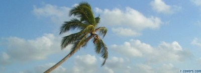 palm tree Facebook Cover timeline photo banner for fb