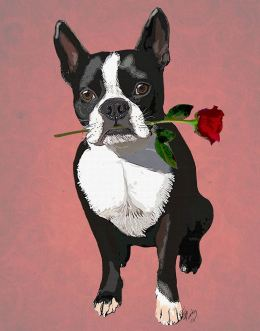 Boston Terrier with Rose in Mouth