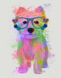 West Highland Terrier Rainbow Splash