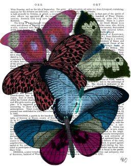 Big Bold Butterflies 1