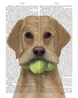 Yellow Labrador and Tennis Balls
